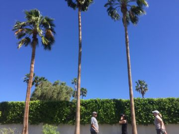 Neighbors Question Rescue Protocol After Cat Leaps From Palm Tree