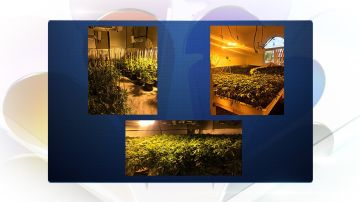 Large Marijuana Grow Operations Found in Rancho Mirage