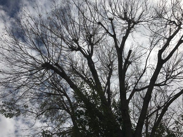 You Ask. We Investigate. ® Home Owners Worried About Dying Tree