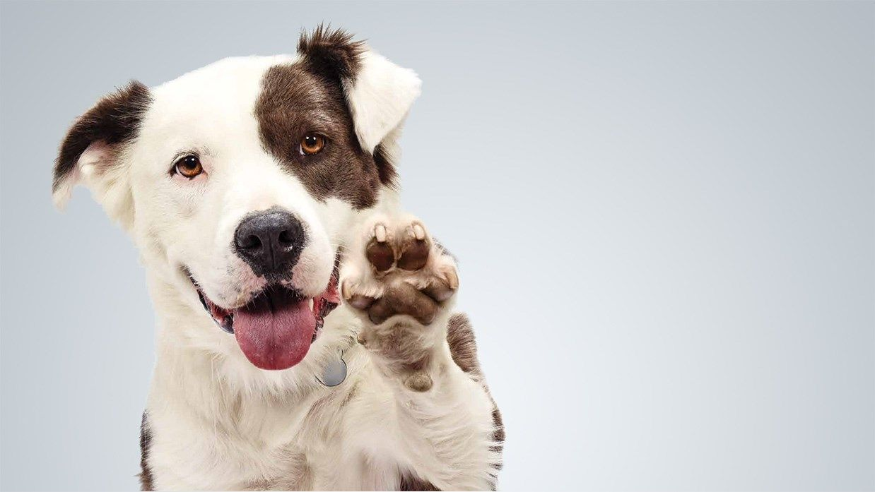 City of Banning Implements Independent Animal Control