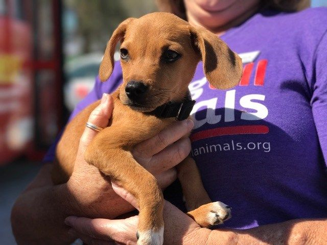 Adopt Me! Rescued Animals From Hurricane Harvey Arrive In The Valley