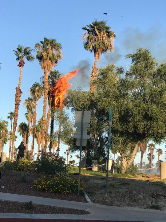 Several Palm Trees Catch Fire during Wind Advisory