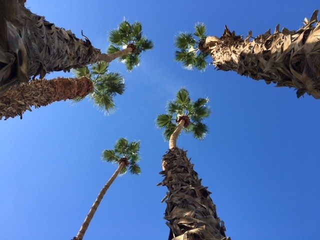 Building Owner In Indio Told To Trim City Trees