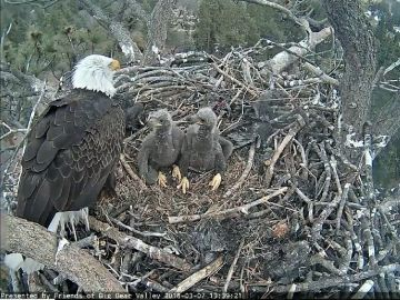 Big Bear hiking trail and area close for bald eagle nesting