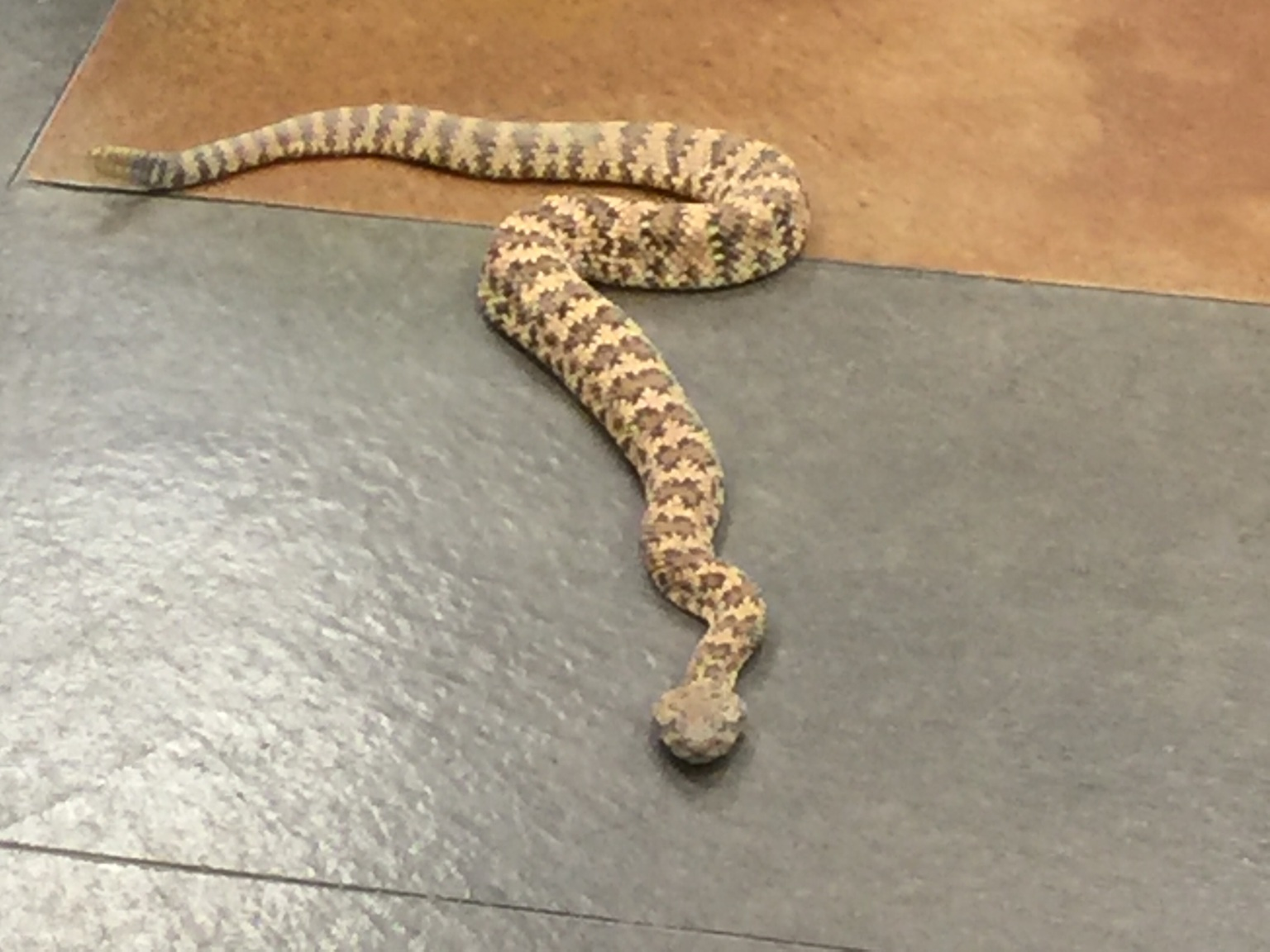 Tips: What Should You Do If You Encounter a Rattlesnake?