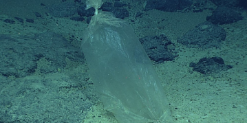 Even the ocean's deepest reaches are not safe from plastic trash