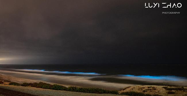 'Bloom' of Bioluminescence Lights Up San Diego Beaches