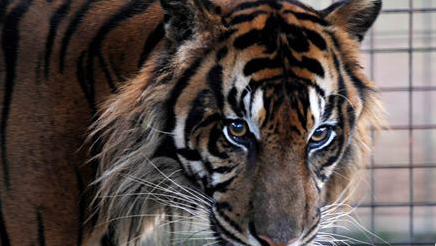 Claws for alarm: Miami school faces backlash for bringing exotic animal to dance