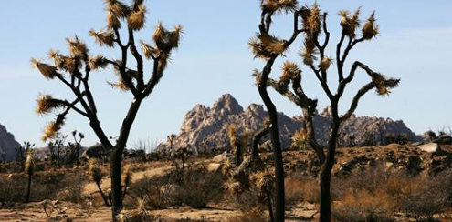 Joshua Tree Reopens