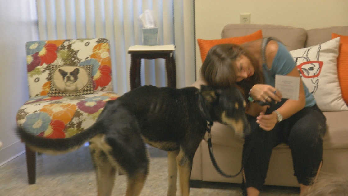 Lost Dog Reunited With Owner After Four Years