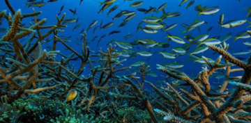 Reversing Obama's initiatives, Trump focuses national ocean policy on business