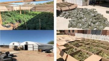 Over 3,100 marijuana plants seized in San Bernardino County