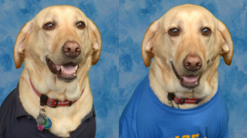 Service dog poses for adorable photos in elementary school yearbook