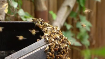 Swarm of Bees Stings OC Woman Over 200 Times, Sends 4 to Hospital