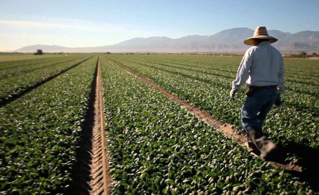 Extreme Heat Making it Dangerous For Valley Farm Workers