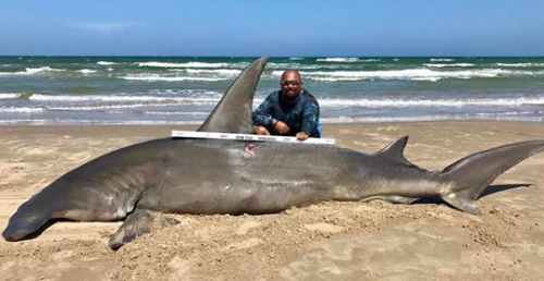 14-Foot Shark Dies on Beach After Being Caught by Fisherman
