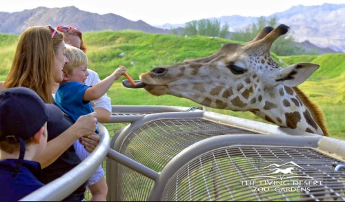 Living Desert Zoo to Reopen Additional Amenities