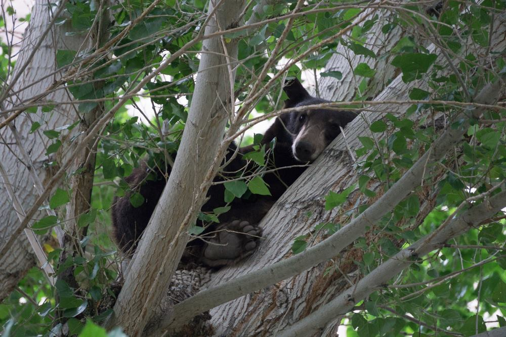 Hey There: Black Bear Closes Whitewater Preserve
