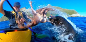 Sassy Seal Slaps Kayaker in the Face With an Octopus