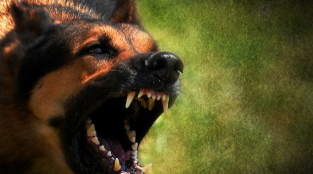 Canine Damages Child's Face in Attack at Menifee-Area Animal Rescue