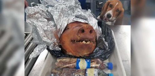 Beagle Sniffs Out a Roasted Pig at World's Busiest Airport