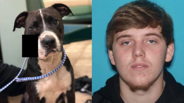 Teen who had 'no time for the vet' shoots his dog with 20-gauge shotgun, authorities say