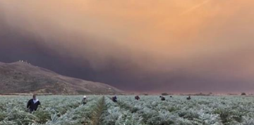 Dozens of Farmers Continue to Harvest Despite Proximity of Fires