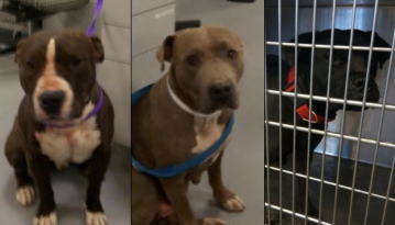 County Officials Seek to Euthanize Canines That Severely Bit Anza Woman