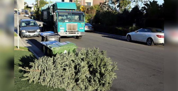 Free Christmas Tree Recycling at Two County Landfills Until Saturday