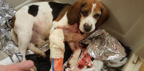 'Road to Recovery': Trucker Saves Dogs Thrown Onto Highway