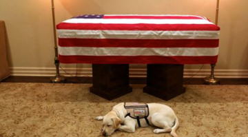 'Mission Complete': Bush's Service Dog Sully Pays Touching Last Tribute
