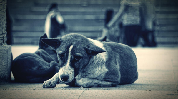 Animal cruelty could become a federal felony