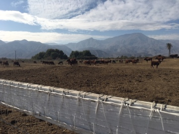 You Ask. We Investigate. RIVCO Animal Services Investigate Cattle Mistreatment in Thermal