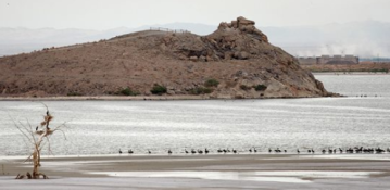 Thousands of Migrating Birds Found Dead at Salton Sea