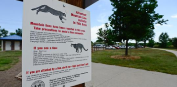 Runner Survives Attack by Choking Mountain Lion to Death