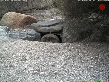 Coachella Valley on Tortoise Watch