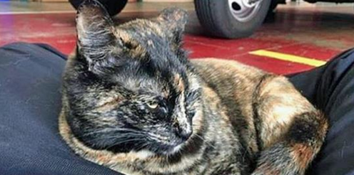 SF Fire Station Workers Campaign to Keep Pet Cat