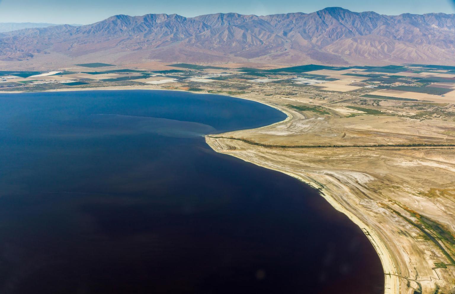 Bird Populations Drop Dramatically Around Dying Salton Sea