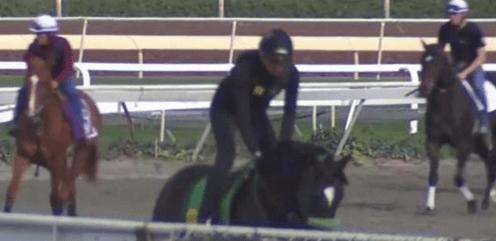 Horse Racing to Resume at Santa Anita Park