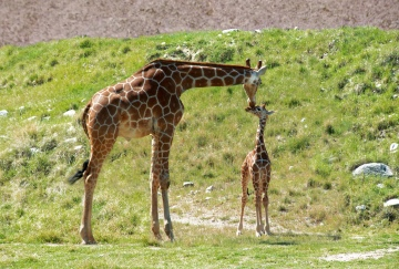 Vicki Lou Who? New Baby Giraffe Named By $100,000 Anonymous Donor
