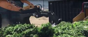 Illegal Marijuana Grows in Anza Targeted in Crackdown