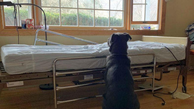 Grieving NJ Dog Finds New Home After Photo of Him Sitting by Deceased Owner's Bed Goes Viral