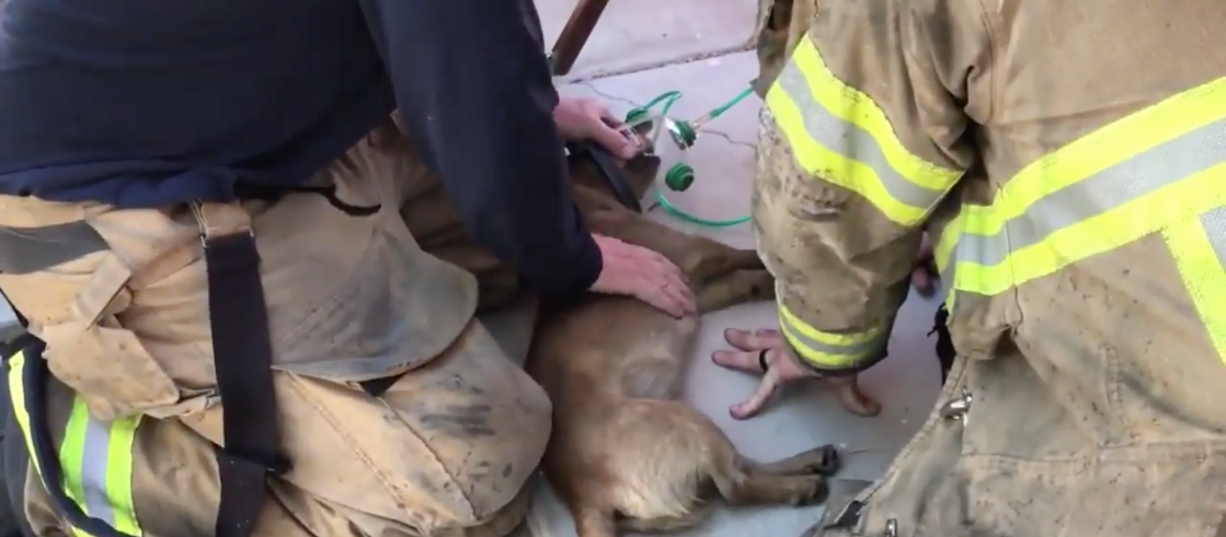 Family Loses Dog and Home in Devastating Fire