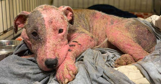 Dog buried alive on Hawaii beach missing 90 percent of fur