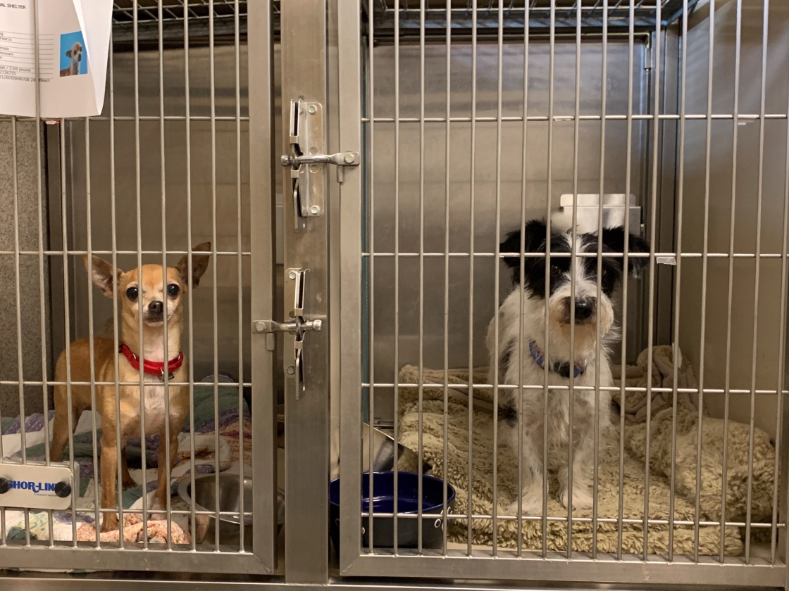 Palm Springs Animal Shelter Pleading for Help