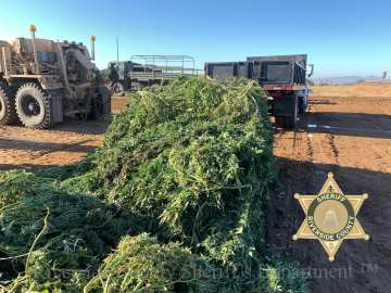 Illegal Perris Valley Cannabis Grows Destroyed During Crackdown