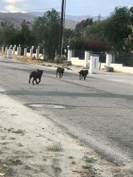 Three Pitbulls Brutally Attack Family Dog in its Backyard, Killing