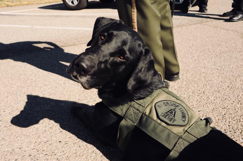 Sheriff's Department Mourns Death Of Canine 'Jax'