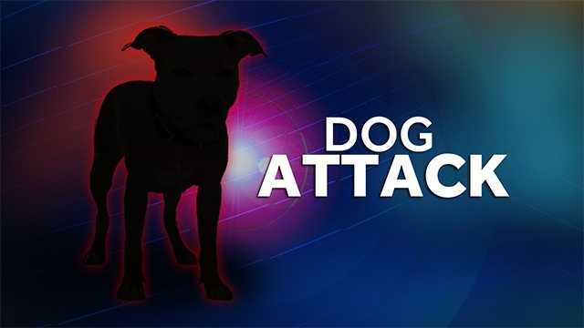 Owner of Pit Bulls Attacked While Trying to Pull the Fighting Dogs Apart