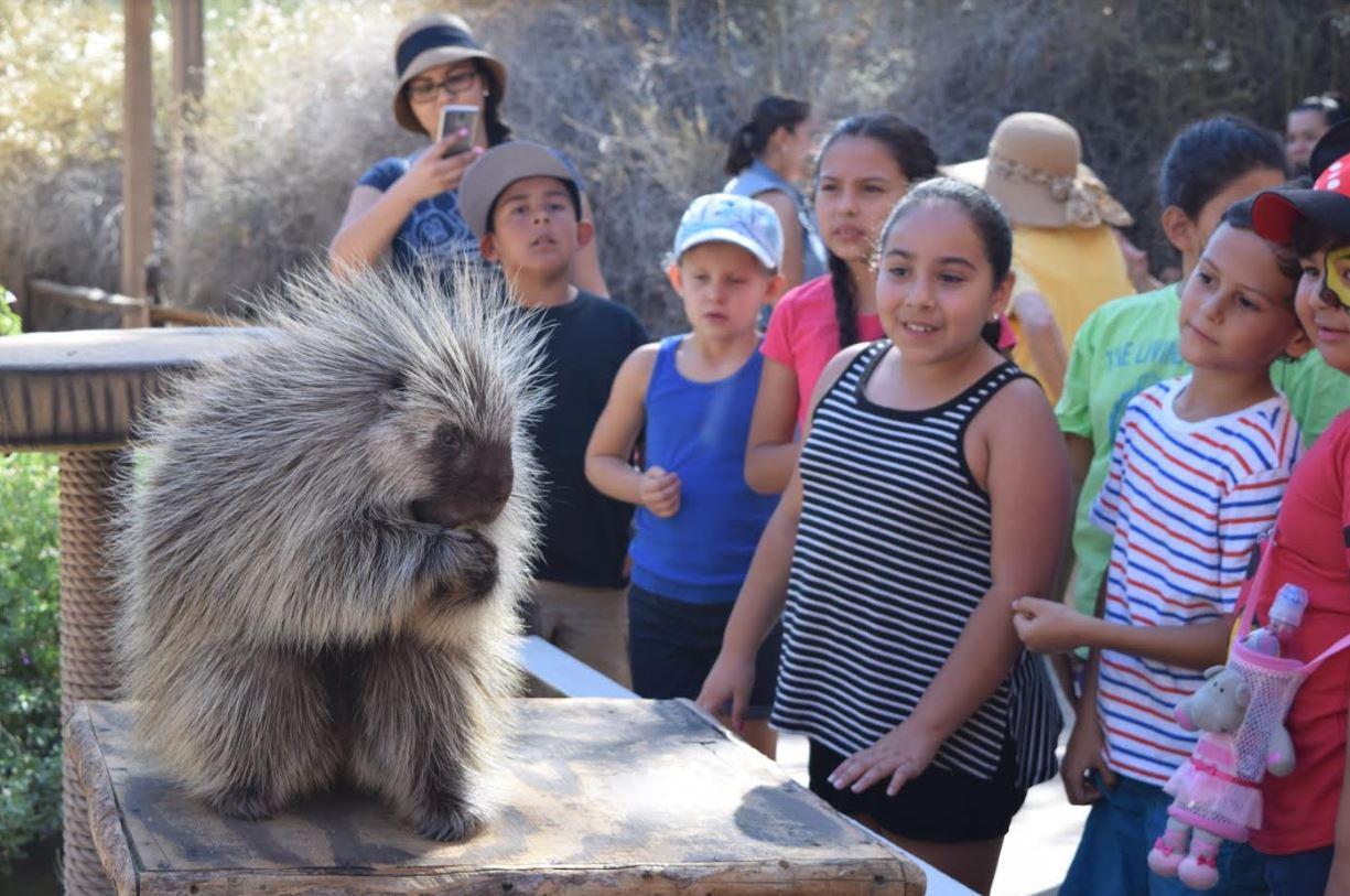 Living Desert Zoo and Gardens to Open an Hour Earlier Beginning Next Week